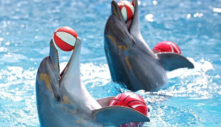 Orlando-SeaWorld