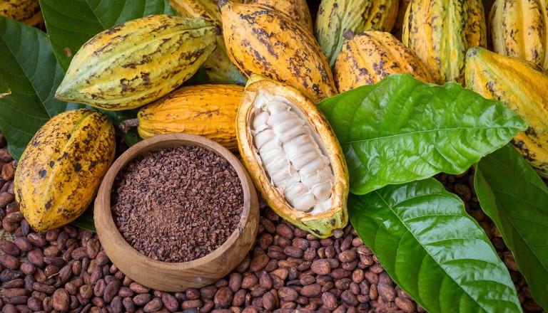 Panama - Green Acres Chocolate Farm