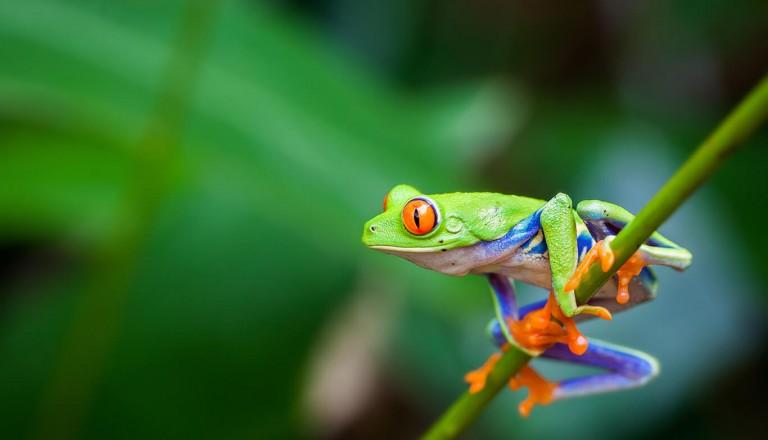 Panama - Panama Rainforest Discovery Center