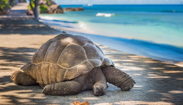 Seychellen - Aldabra