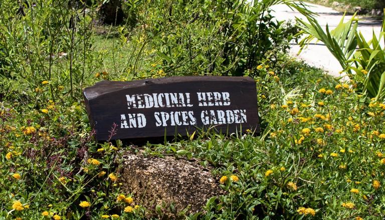 Seychellen - Gewuerzgarten - Le Jardin du Roi