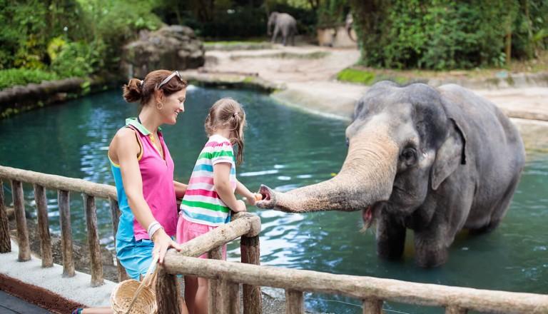 Singapur - Zoo