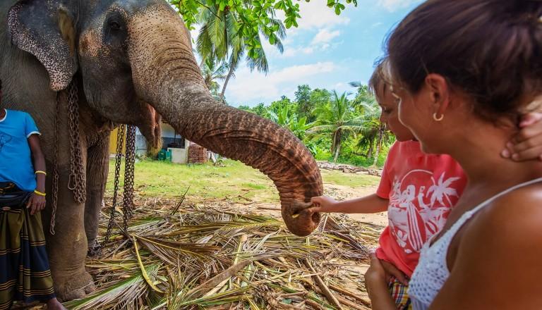 Sri-lanka - Elephant Transit Home beim Udawalawe Nationalpark