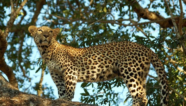 Suedafrika - Krueger Nationalpark