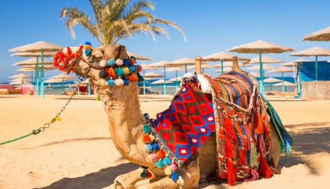 Pauschalreise Hurghada