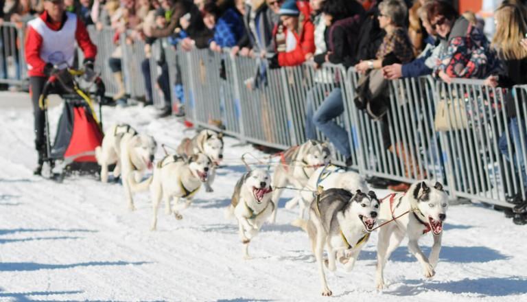 Iditarod - Spannender Zieleinlauf