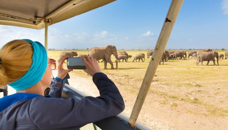 Krueger-Nationalpark - Elefanten-Safari