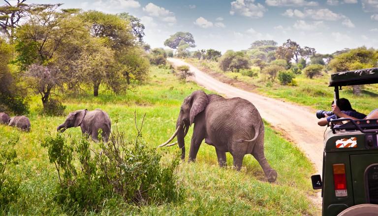 Safarireisen