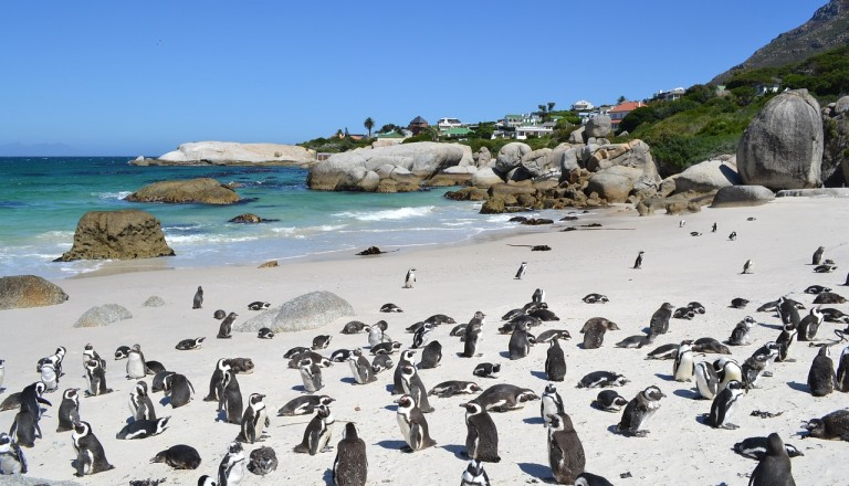 Southafrica - reisen