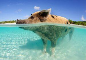 Billigflüge auf die Bahamas