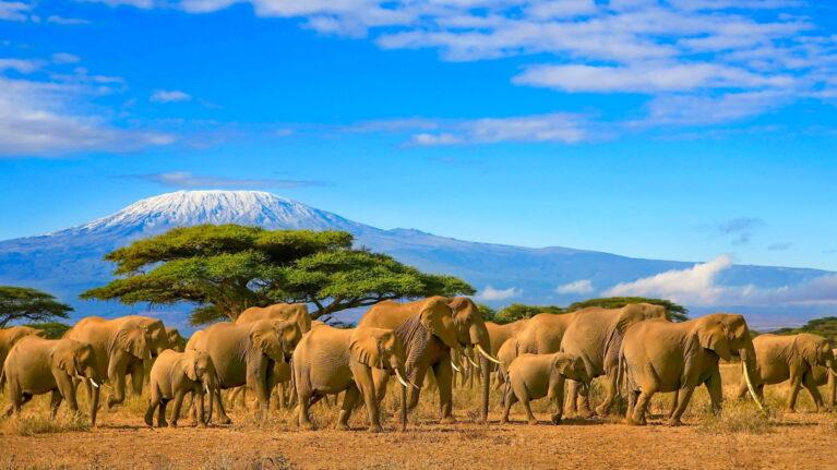 Billigflüge nach Kenia
