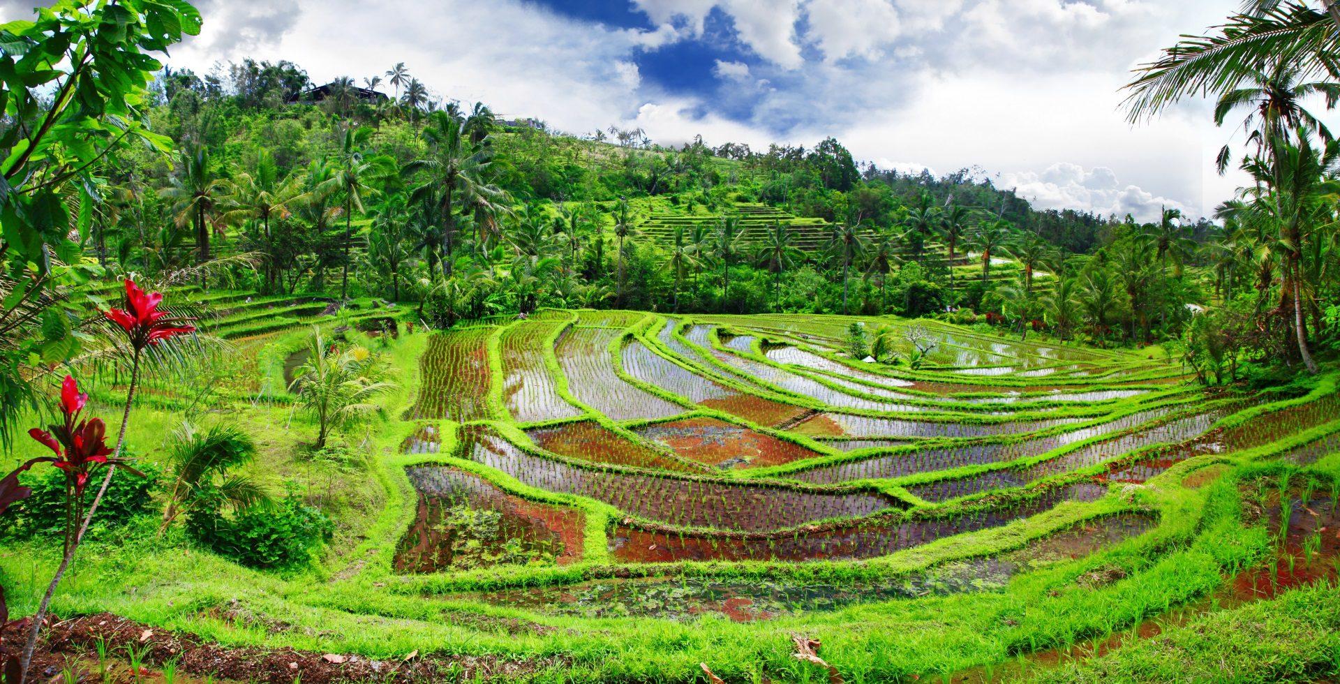 Billigflüge nach Indonesien
