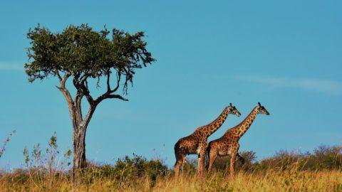 Flüge nach Tansania