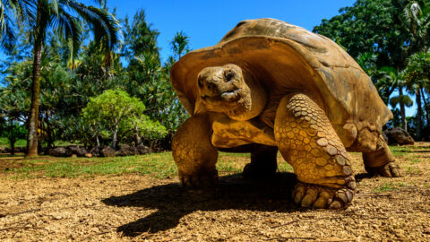 Flüge auf die Galapagos-Inseln
