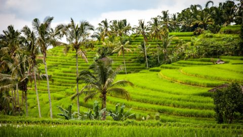 Flüge nach Indonesien