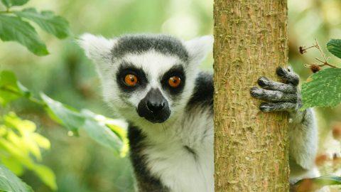 Flüge nach Madagaskar