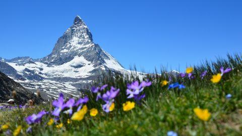 Flüge in die Schweiz