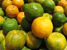 Zitrusfrüchte Zypern