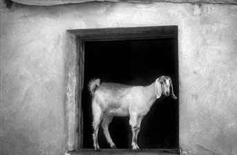 Tierwelt Zypern